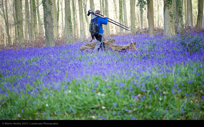 Sussex Bluebells, April 2014 9